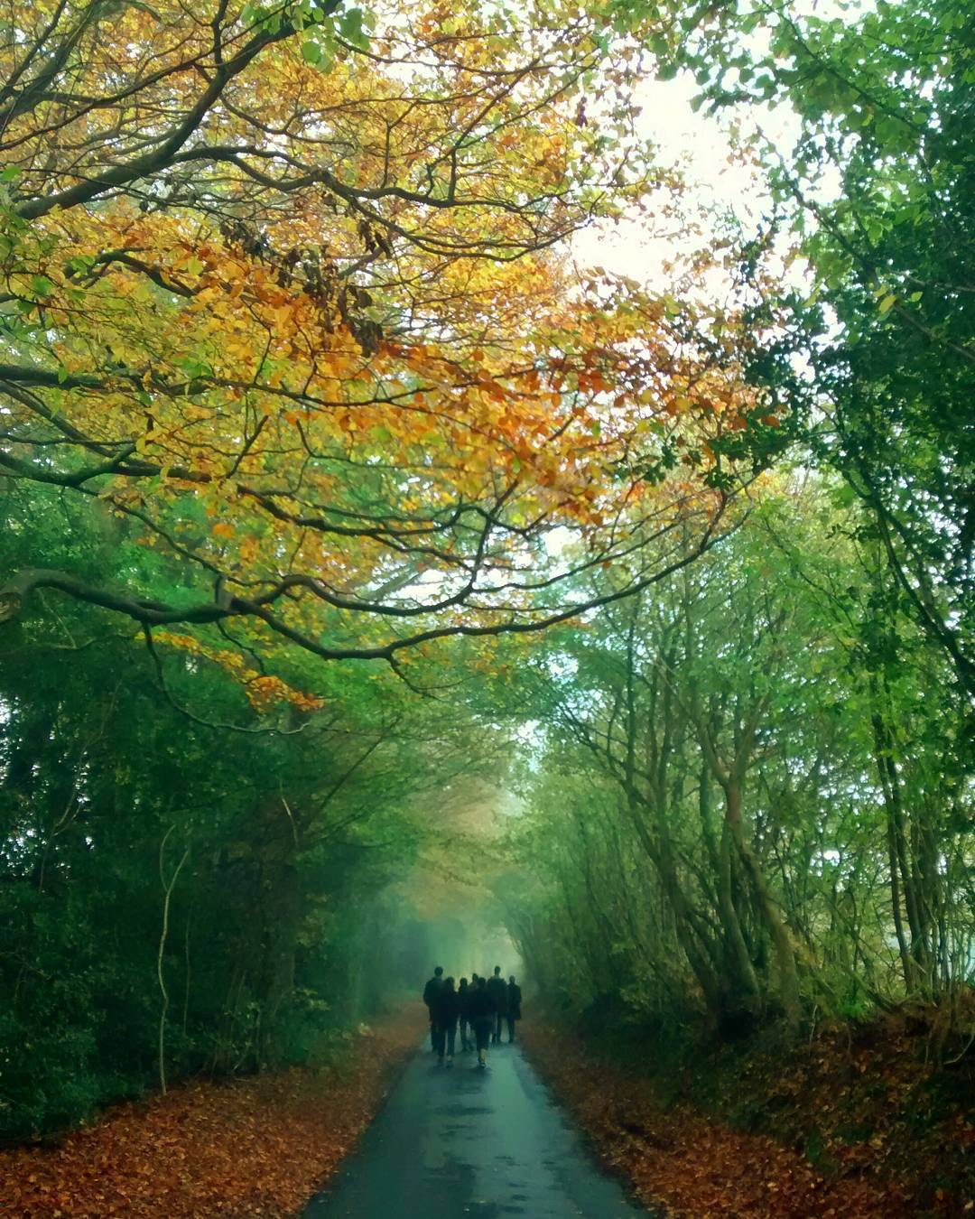 Echoes of an amazing #weekend with good friends in an stunningly beautiful place.  #autumnleaves #autumn #england #countryside #englishcountryside #path #forest.